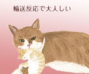 親猫が子猫の首筋を噛んで運ぶ