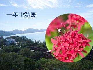 マレーシアの森と海と花