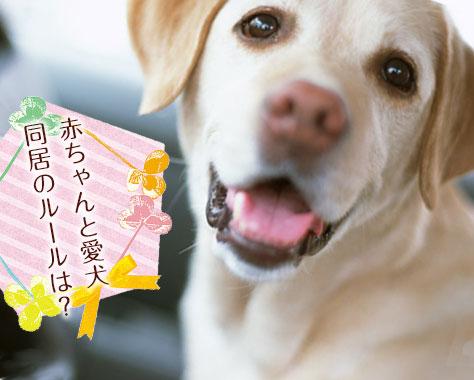 愛犬と赤ちゃんが仲良く同居するコツ6つ!どっちも大切な家族!