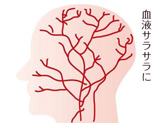 頭の血管図