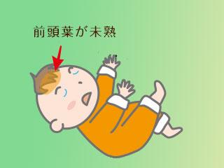 赤ちゃんの前頭葉を赤矢印で指す