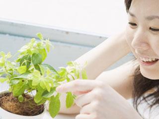 鉢植えの植物を触る女性
