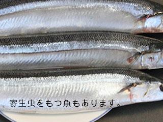 生魚の秋刀魚