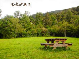 木立に囲まれた草地の広場
