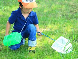 昆虫採取をする子供