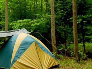 木立の傍に立つテント