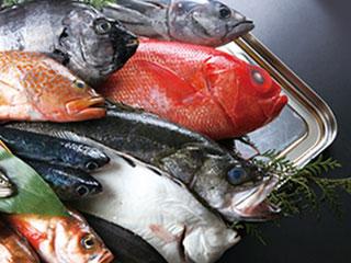並んだ鮮魚
