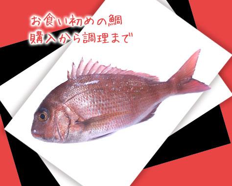お食い初めの鯛の購入方法/焼き方/飾りなどポイント7つ