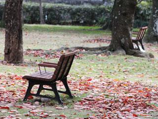紅葉の中の公園ベンチ