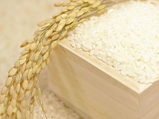 お米や調味料の節約ポイント
