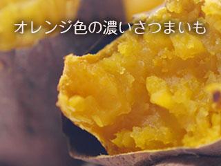 焼き芋のホクホクの切り口