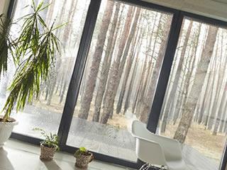 大きい窓と自然が豊富な掃除しやすい家