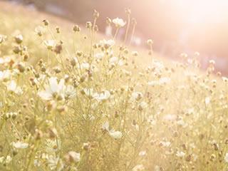 昔の彼の思い出を美化した綺麗な朝焼けと花