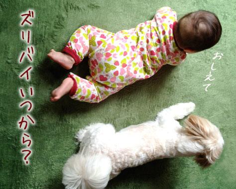 ずりばいとは?いつから始まる?赤ちゃんへの影響/練習法