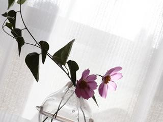 離婚する家庭にある手入れがされていない花