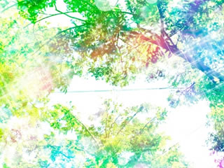 晴れ渡る青空と安定した緑の森
