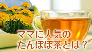 たんぽぽ茶で母乳トラブル改善!授乳中におすすめの飲み方