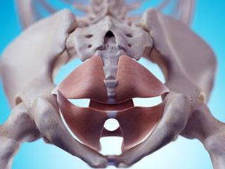 骨盤底筋群