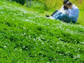 緑豊かな公園で語り合う仲良し夫婦