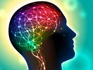 人間の脳で働く神経回路