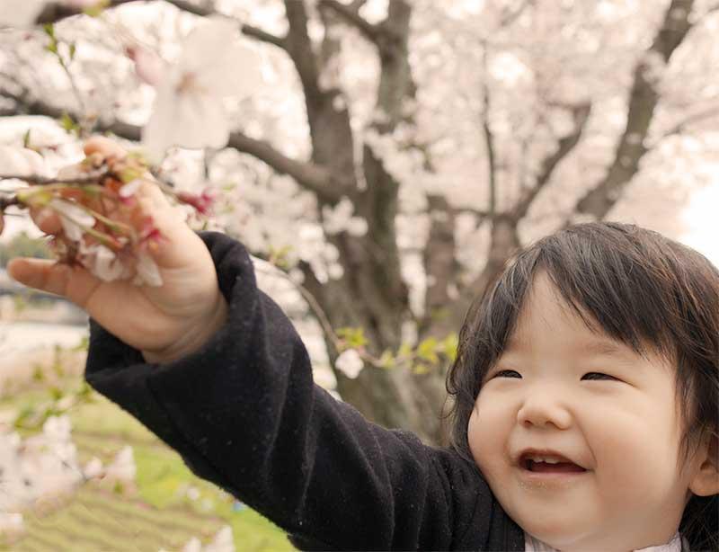 春先に桜を見ている子供