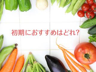 いろいろな野菜が並んでいる