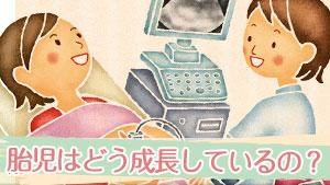 胎児はどう成長しているの?【妊娠週数別】赤ちゃんの成長