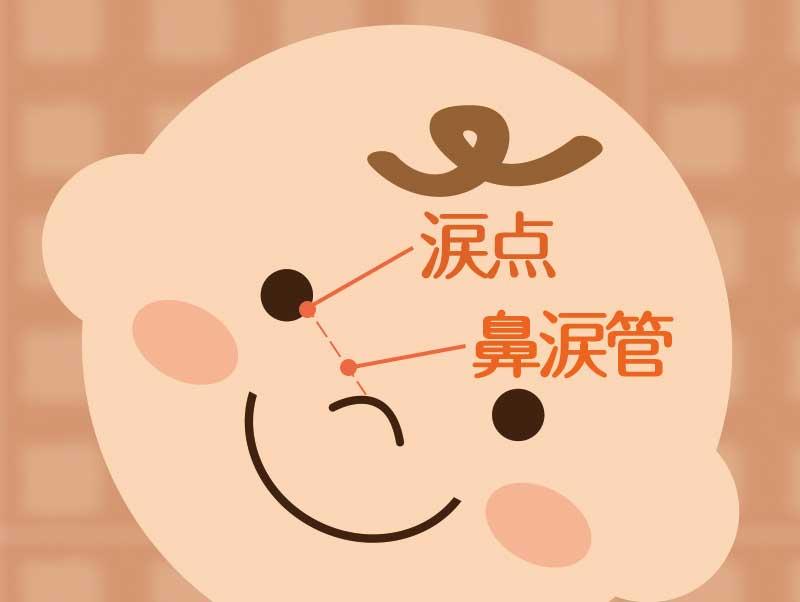 赤ちゃんの顔を使った涙点と鼻涙管の解説イラスト