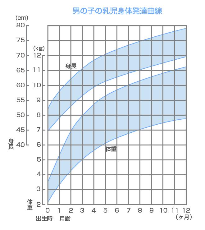 新生児期の男の子の乳児身体発達曲線