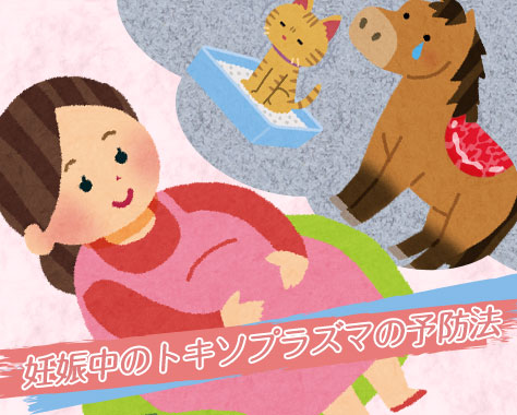 トキソプラズマ症の予防法~妊娠中は猫と馬刺しに要注意!