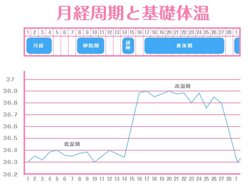 月経周期と基礎体温のグラフ
