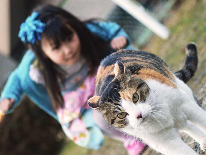 外で猫の後を付いて歩く女の子