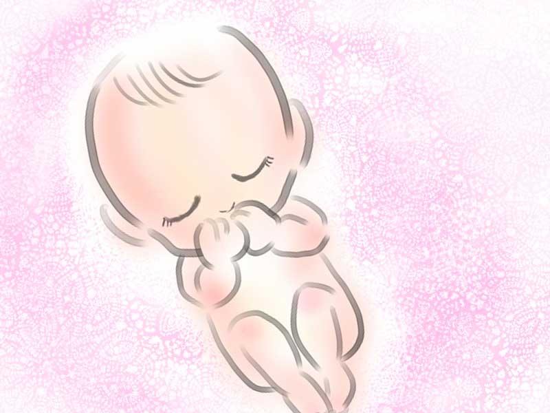 胎児のイラスト