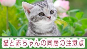 猫と赤ちゃんの同居の注意点!安全に仲良く暮らす工夫とは