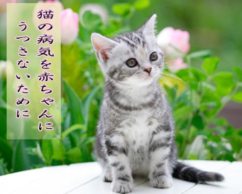 猫と赤ちゃんの同居の注意点!危険な病気を予防するには