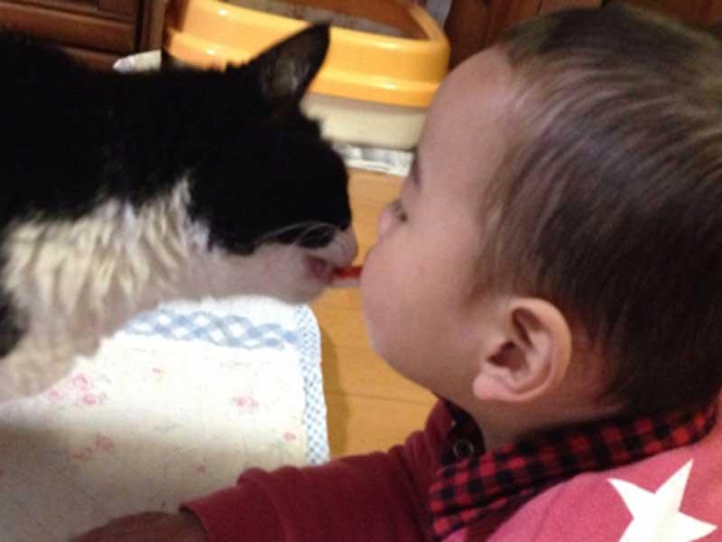 遊んでいる猫と赤ちゃん