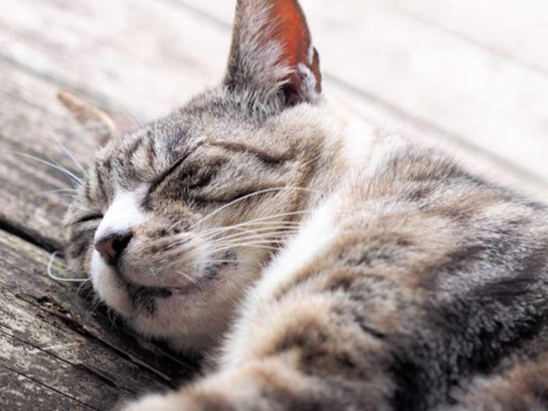 寝ている猫ちゃん