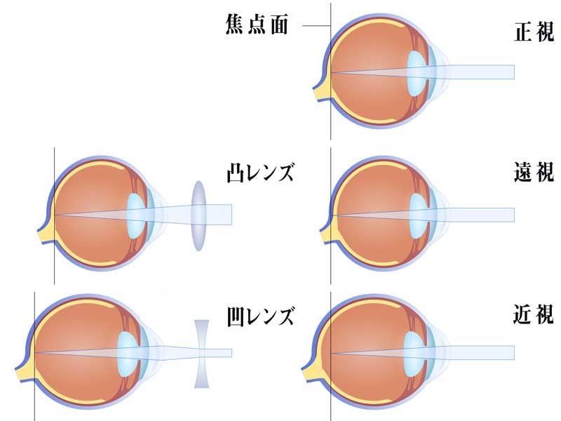 目の構造とカメラのイラスト