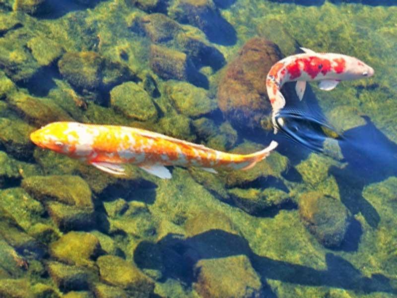 泳いでいる魚
