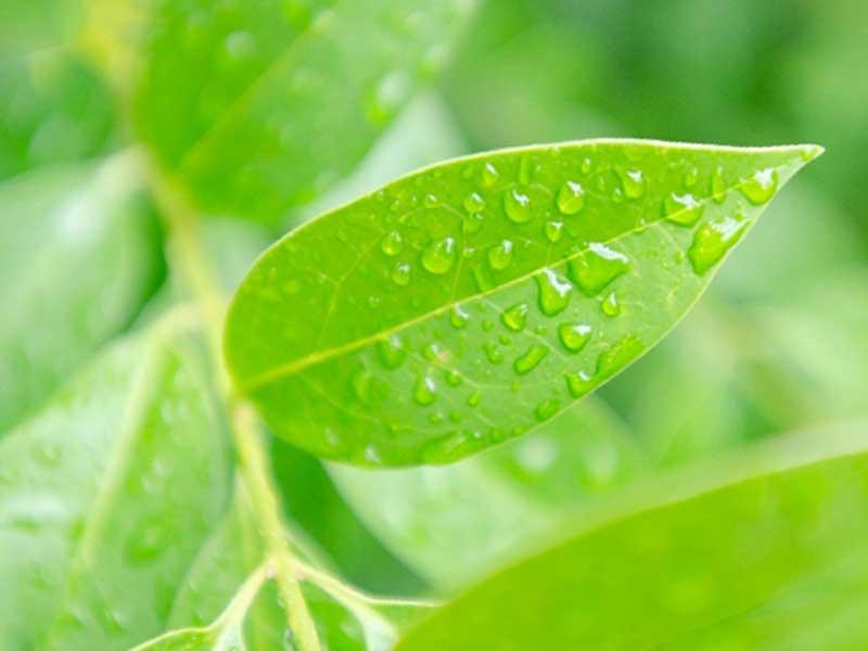 水滴のある木の葉