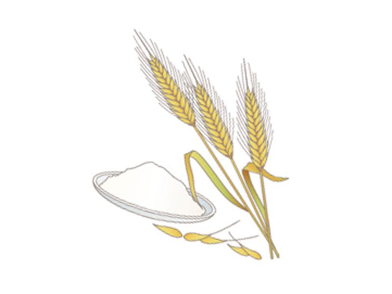 小麦と小麦粉のイラスト