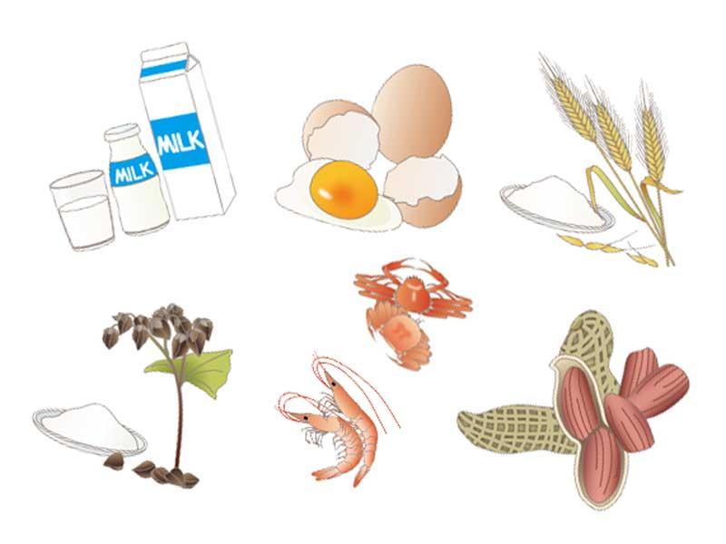 アレルギー物質の牛乳、玉子、麦、そば、蟹、エビ、ピーナッツのイラスト
