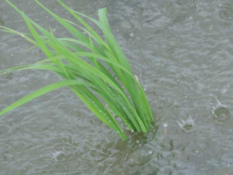 水たまりができる強い雨