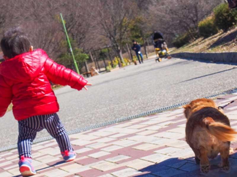 子供と犬の散歩