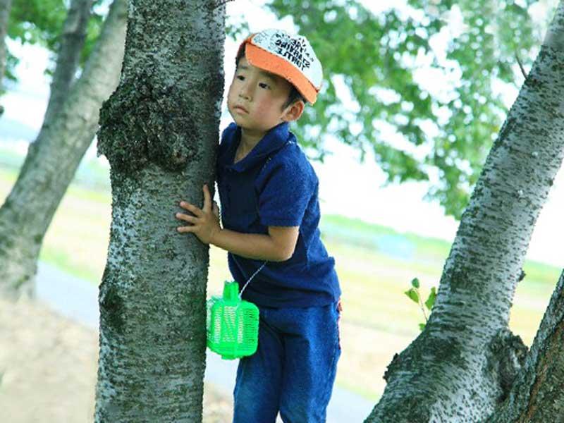 木に登っている子供