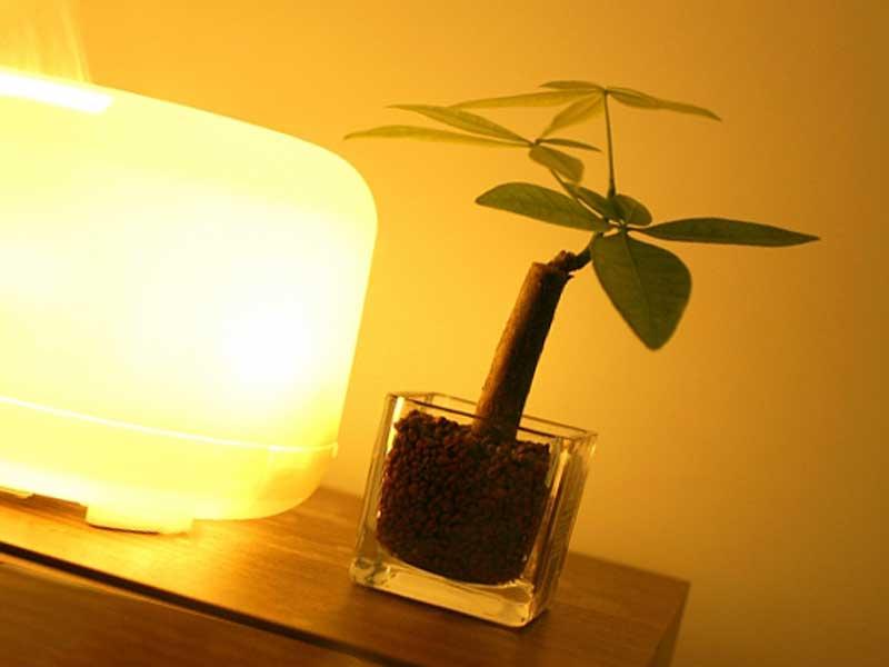 アロマランプと観葉植物