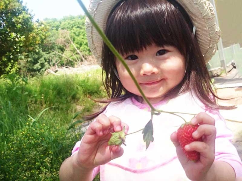 イチゴ狩りをしている二歳の子供