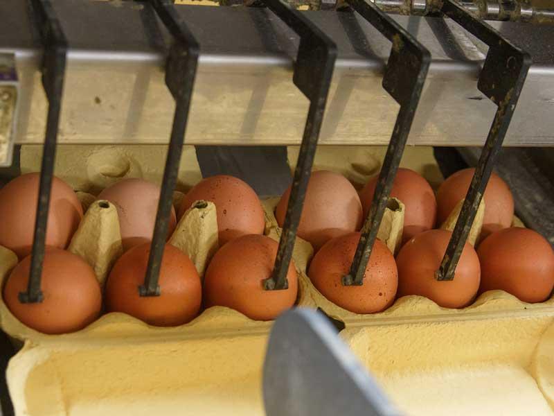 卵の殻に賞味期限を刻印している機械