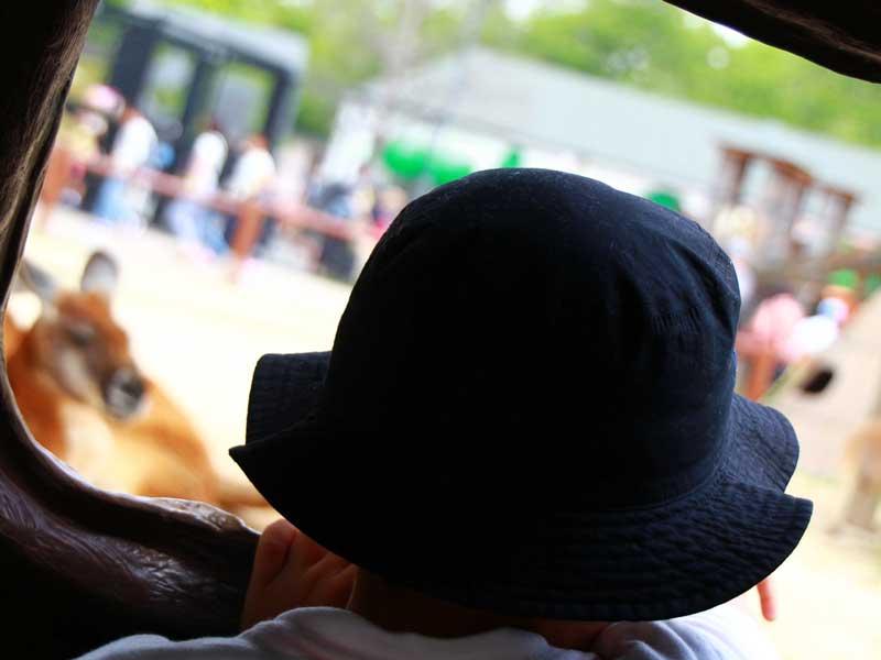 動物園で動物を見ている子供