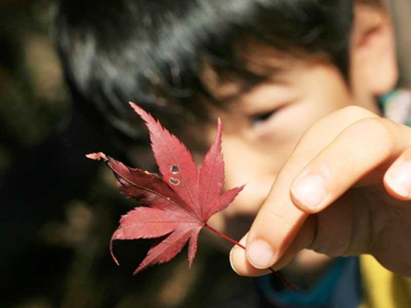 紅葉を持つ男の子
